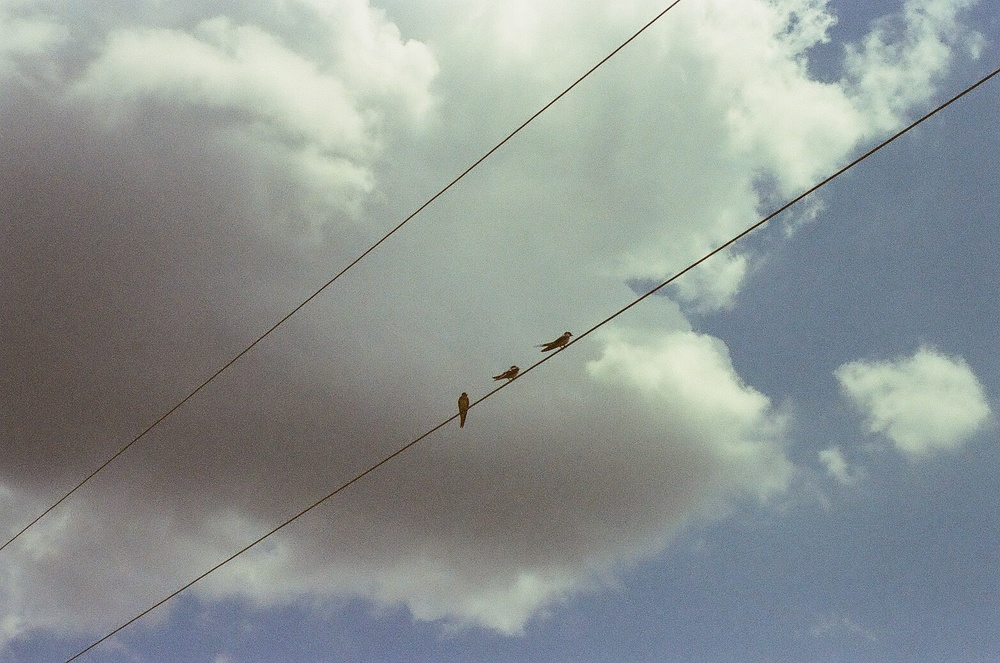 Birds on telephone line