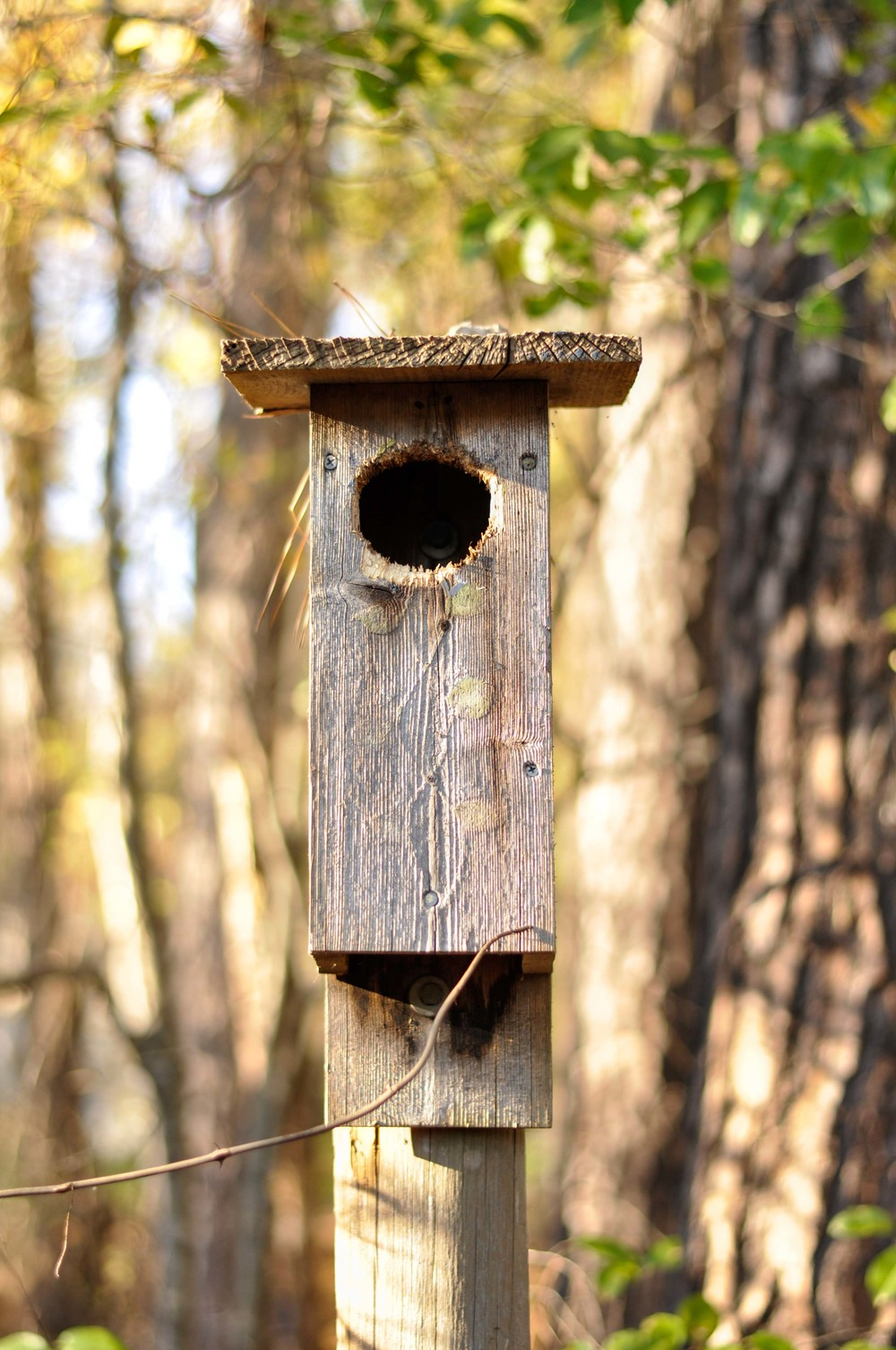 bass lake bird houses_11.jpg