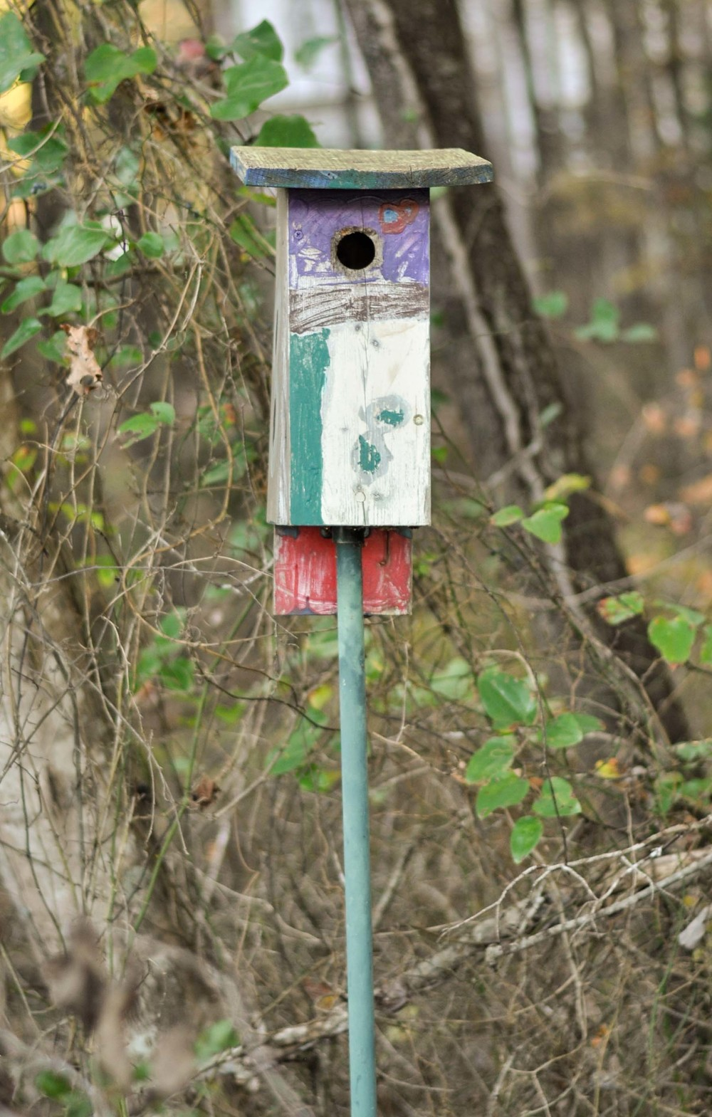 bass lake bird houses_12.jpg