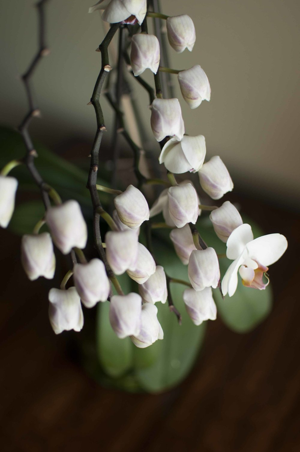 orchid6_17_2.jpg
