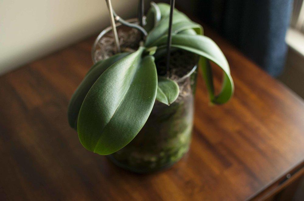 orchid6_17_15.jpg
