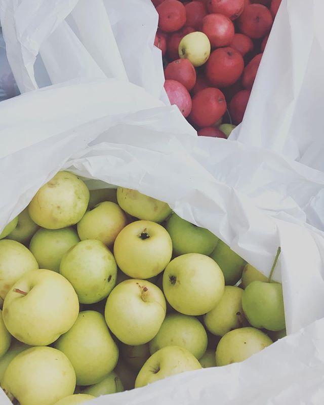 Vad en del av oss gör innan första kundpasset, jo lämnar in 68kg äpplen till mustning hos @umemust , ( just idag i Ånäset). Visst är det häftigt att umeå har eget musteri!  #umeåvillmer #äppelmust #umemust