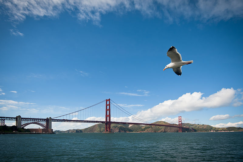 800px-Golden_Gate_Bridge_and_bird matthew roth.jpg