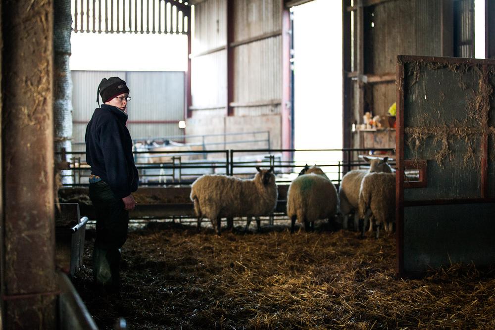 lamb-9.jpg