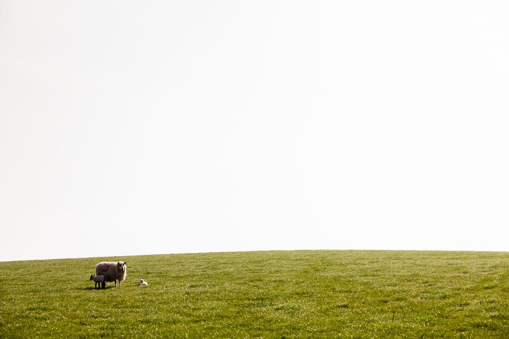 lamb-11.jpg