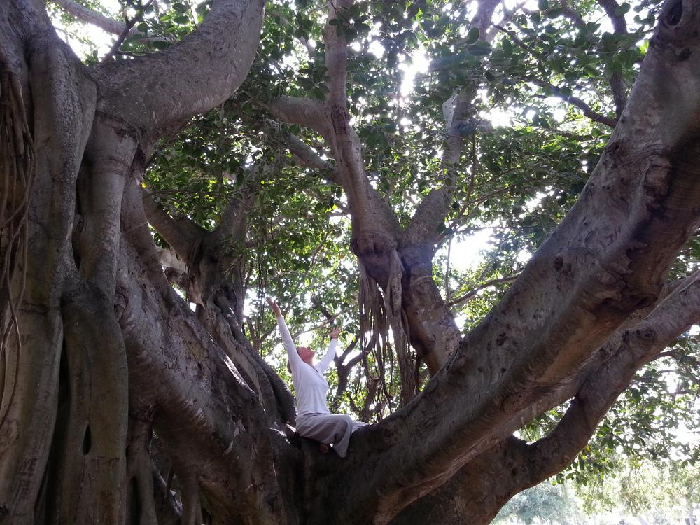 Inez in tree.jpg