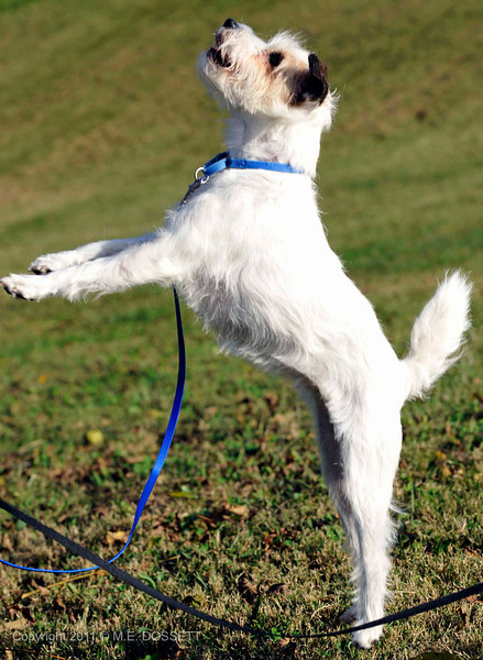 Remy jumping.jpg
