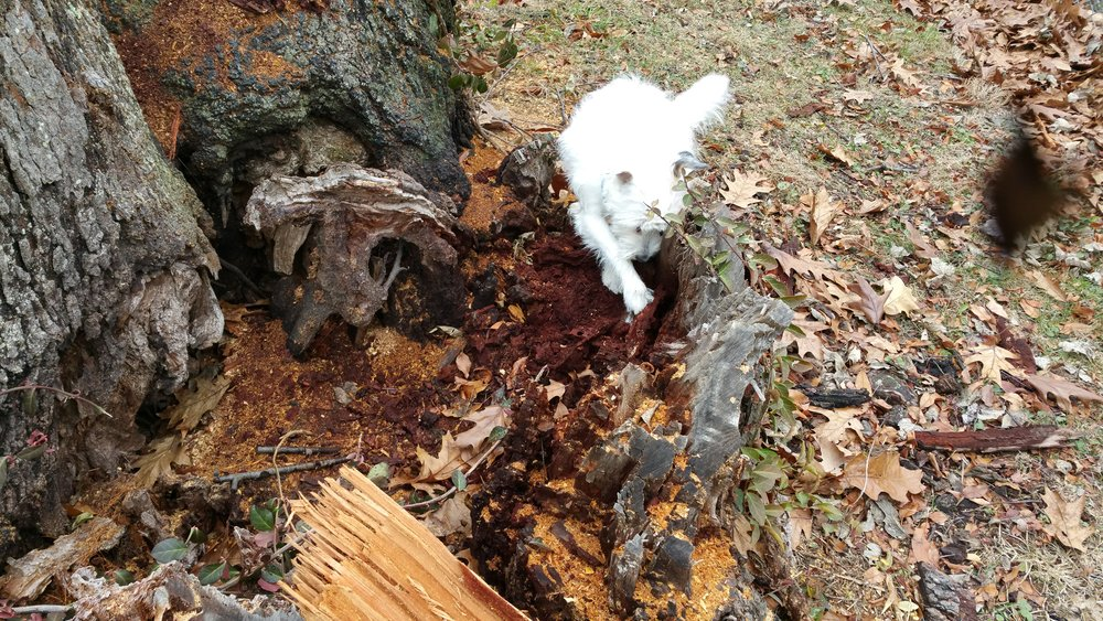 Remy finding source tree stump.jpg