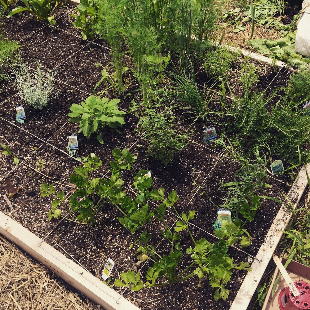 Herbs planted