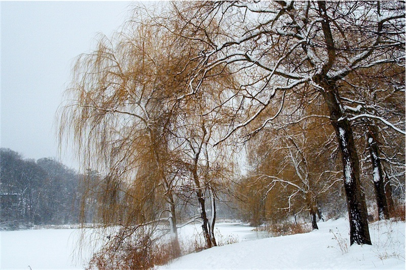 Winter in High Park, Toronto's version of New York's Central Park (Photo by Odette Foronda)