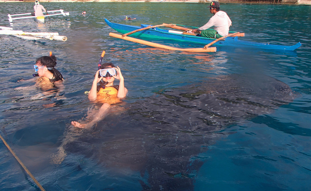 As we jumped into the water, a whale shark swam close beneath us. (Photo courtesy of Aurora Almendral)