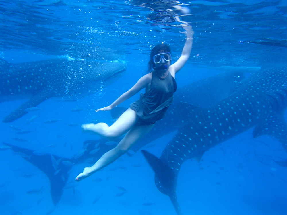 Swimming with the sharks in the waters of Oslob, in Cebu (Photo courtesy of Aurora Almendral)