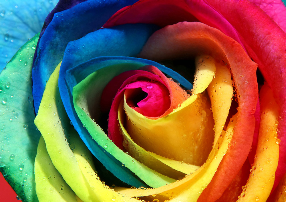 color-rose.jpg