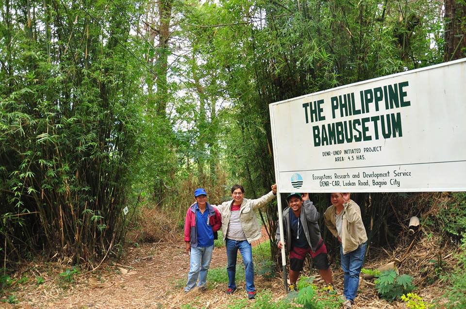 Bambusetum. The foundation and the Ecosystems Research and Development Service Department of Environment and Natural Resources (ERDS-DENR) partnered to propagate more bamboo in Barangay Loakan, Baguio City. (Photo courtesy of the Philippine Bamboo Foundation, Inc.)