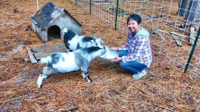 Minnie and her goats in North Carolina (Photo by Irwin Ver)