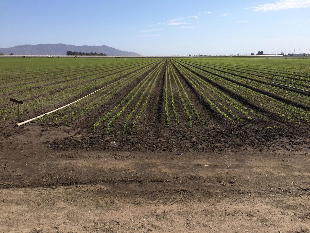 A field in Oxnard, California, a top berry-producing region for the state and a historic home to Filipino farm workers. Climate change is presenting new challenges to food-producing systems, including increased rainfall, higher temperatures and extensive drought.