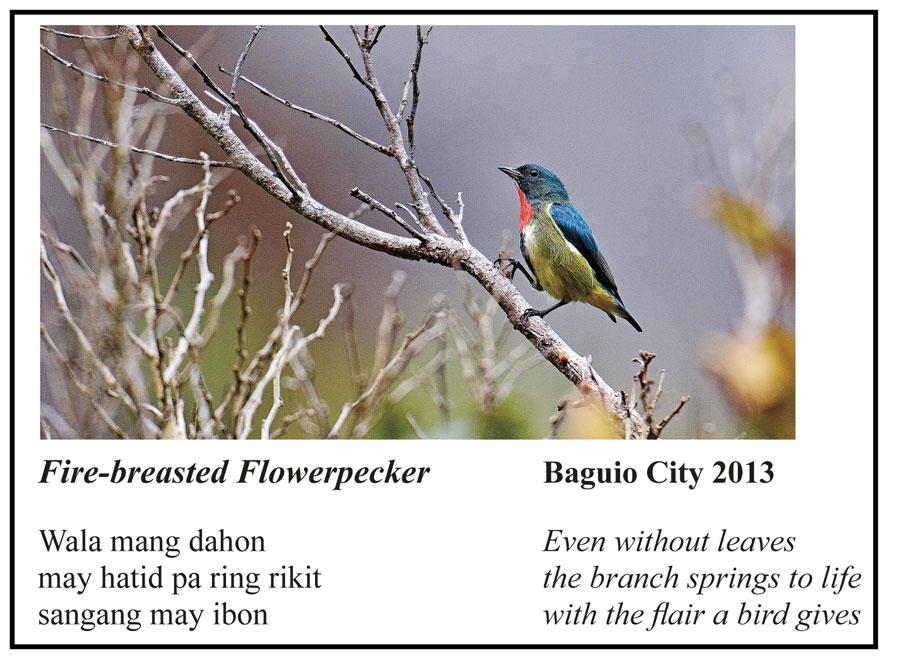 Pheasant-tailed-Jacana.jpg