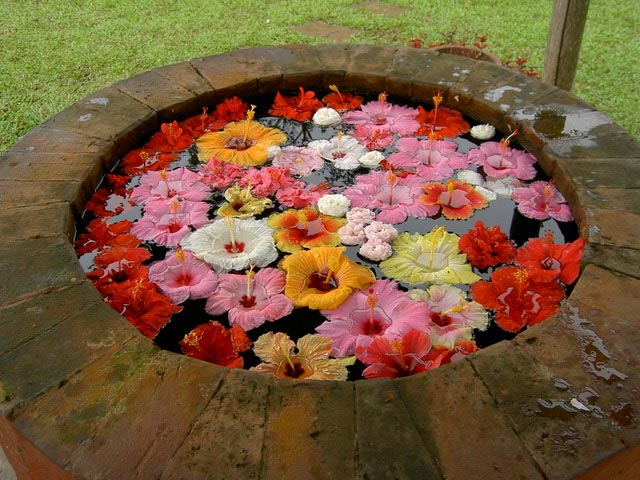 The flowers at the Mayumi Wishing Well at Eden Nature Park.