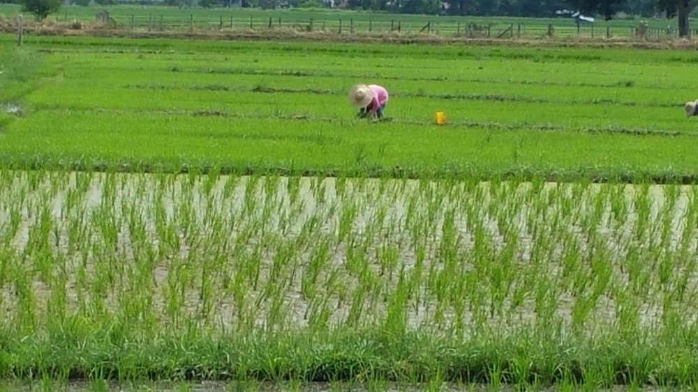 Farmer planting (Photo by Patria Rivera)