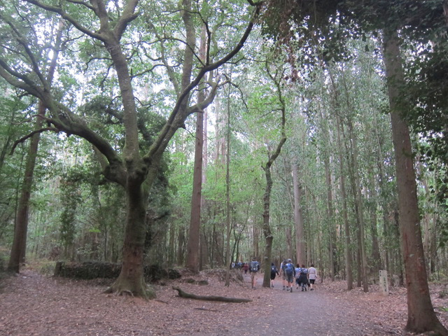 Hiking through one of the forests of Camino de Santiago.