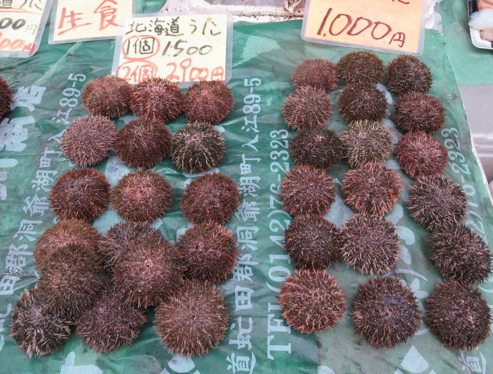 Sea urchins are an expensive delicacy. (Photo by Bella Bonner)