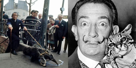 Dali photographed with his menagerie of rare animals; left, walking an anteater in Paris and, right, an ocelot in New York. I doubt that he would have been allowed to keep, much less exhibit, these endangered animals as part of his public persona.