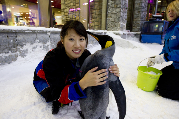 DUBAI, UAE. January 30, 2012 –  A colony of snow penguins moved into Ski Dubai in Mall of Emirates. I even got to hug one!