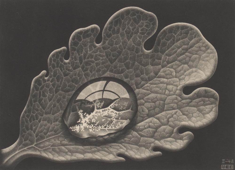 Dewdrop. M.C. Escher (1948)