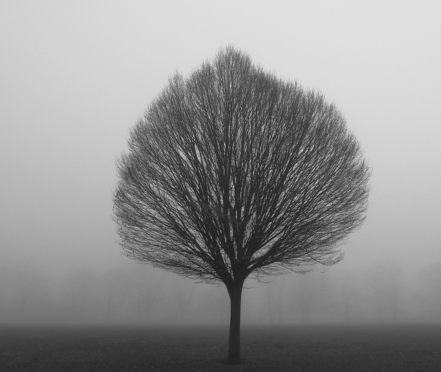 Fog Clissold Park London December 11 2013 by David Holt. Via Flickr. View the original image here.