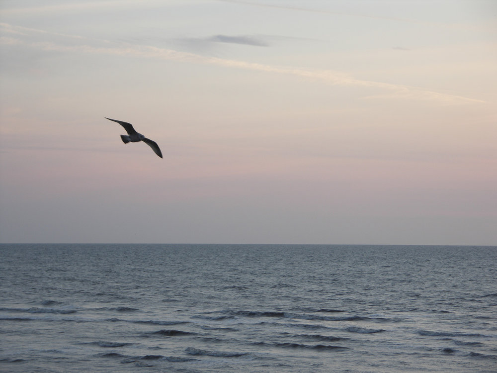 Seagull at Blackpool North Shore Sunset by  Henry Brett . CC BY-2.0 via Flickr