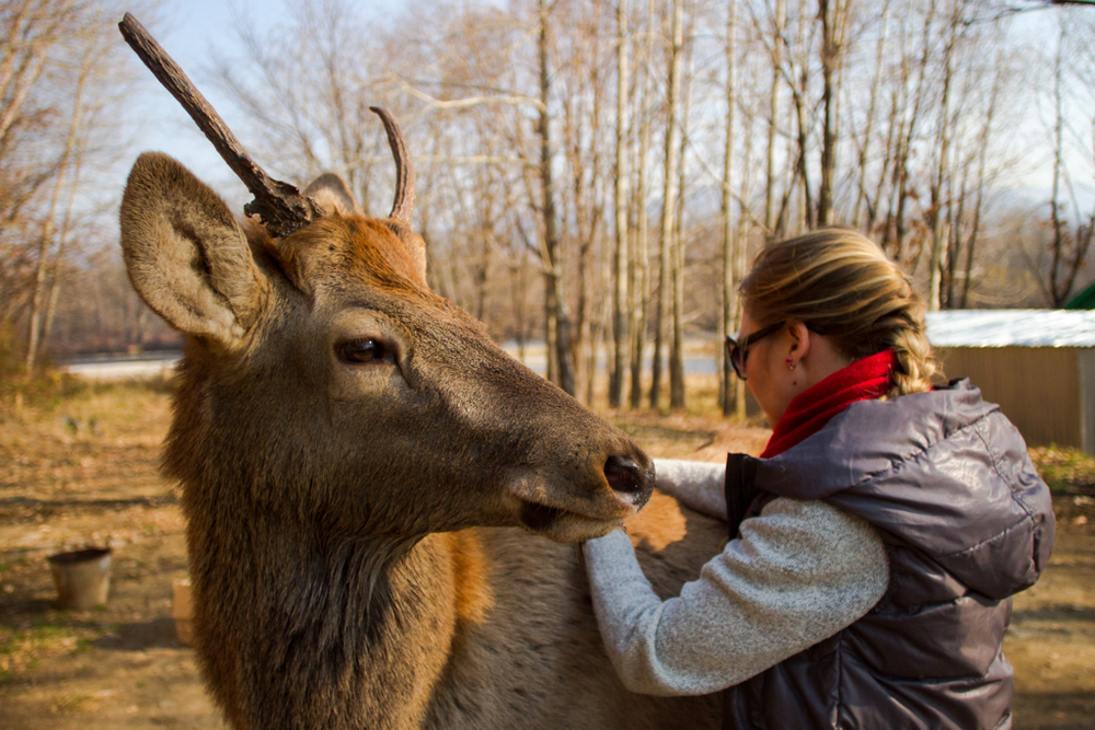18 months ago Masha rescued this Russian Red Deer after he had become oprhaned, his parents killed by poachers.