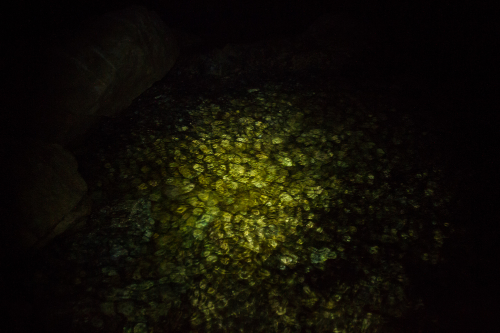 Tidal zone waves, along the cliffs, wash over a smooth pebble floor. Illuminated by a headlamp the green and gold stones shimmer and move as if they are a backlit mosaic.