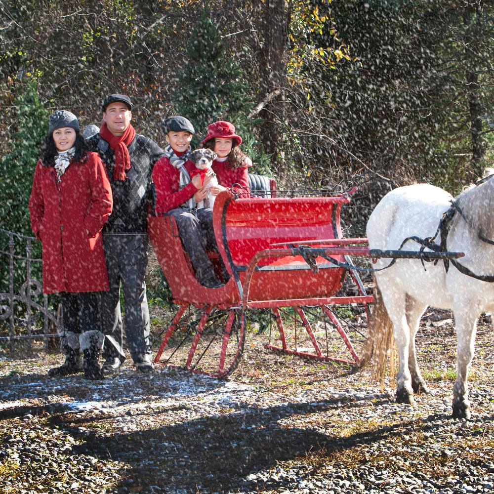 Horse n sleigh.jpg