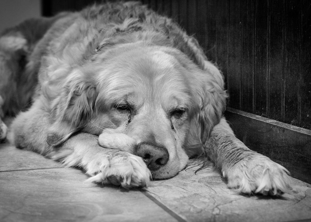 Bailey's last days-005.jpg