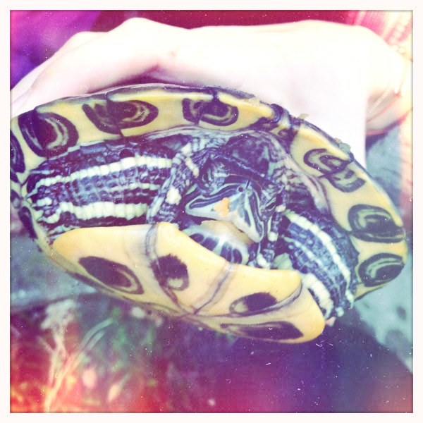 Turtle friend!  Bettie XL Lens, Blanko Film, No Flash, Taken with  Hipstamatic
