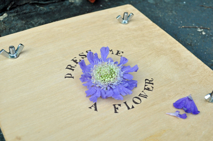 (via bookhoucraftprojects: Project #92: Making a Flower Press)