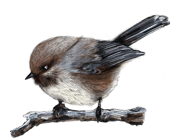managemeasure_birdFLAT.jpg