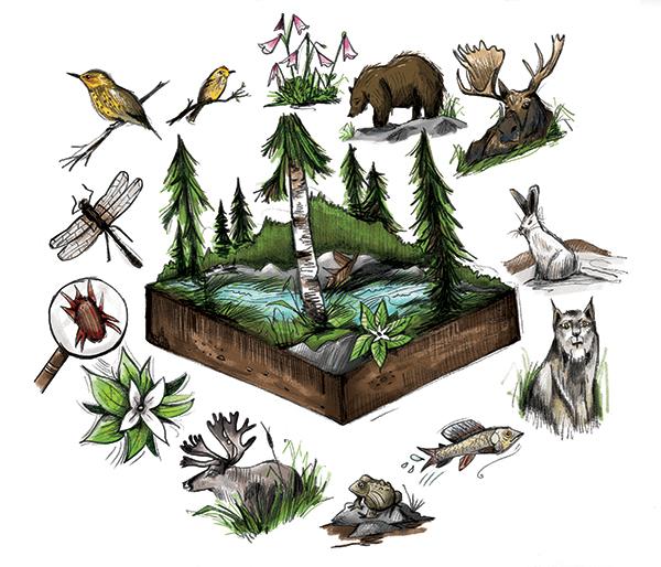 whatisbiodiversityFLAT_1.jpg