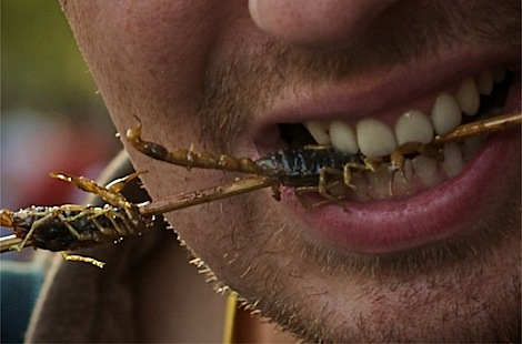 Eating scorpion