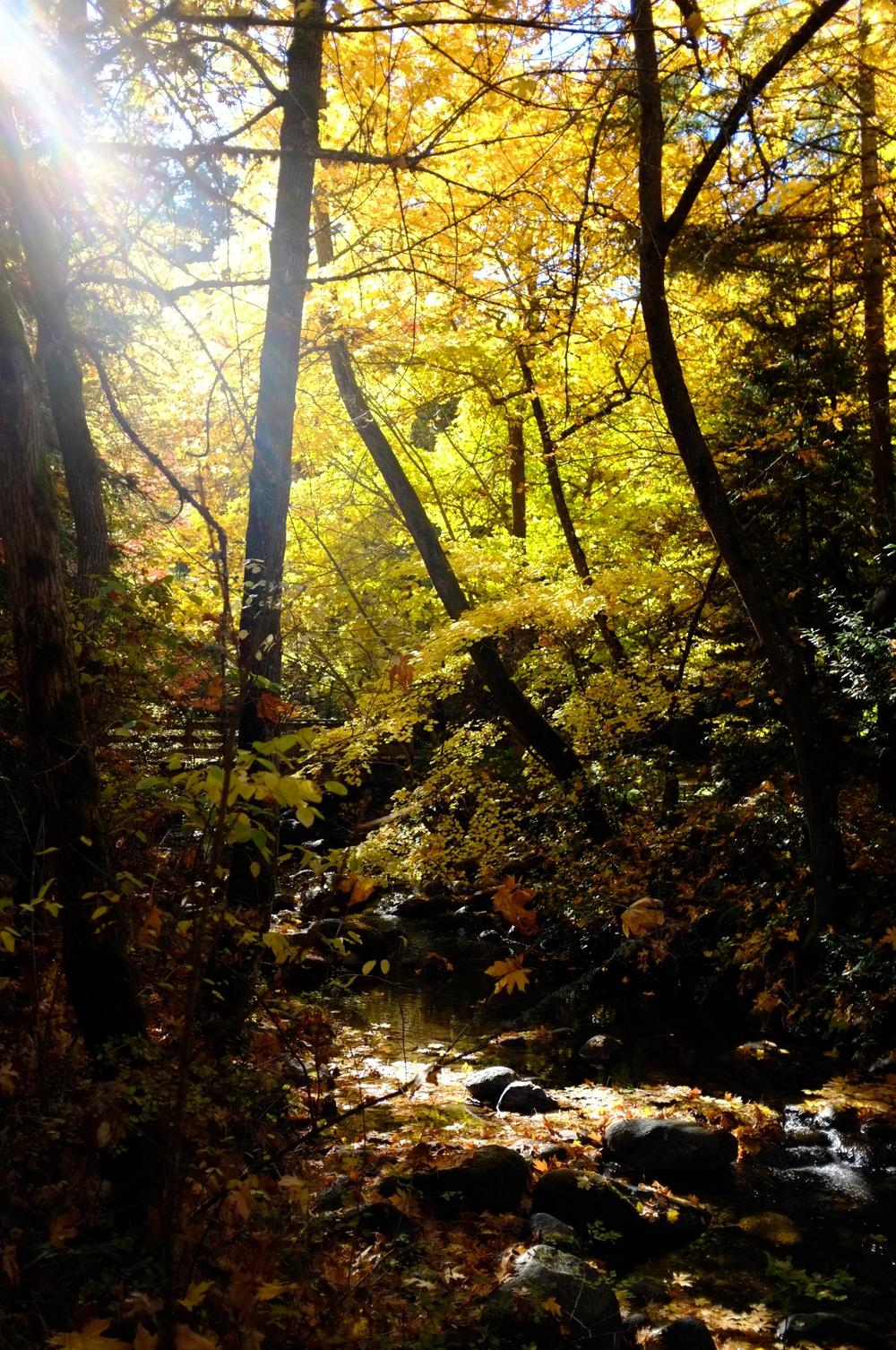 Rebecca_2012-11-04_11-59-06__DSF1575_©JosephLinaschke2012.jpg