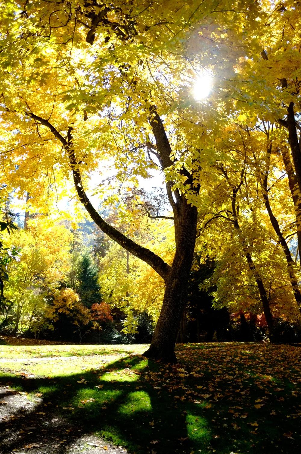 Rebecca_2012-11-04_11-44-55__DSF1565_©JosephLinaschke2012.jpg