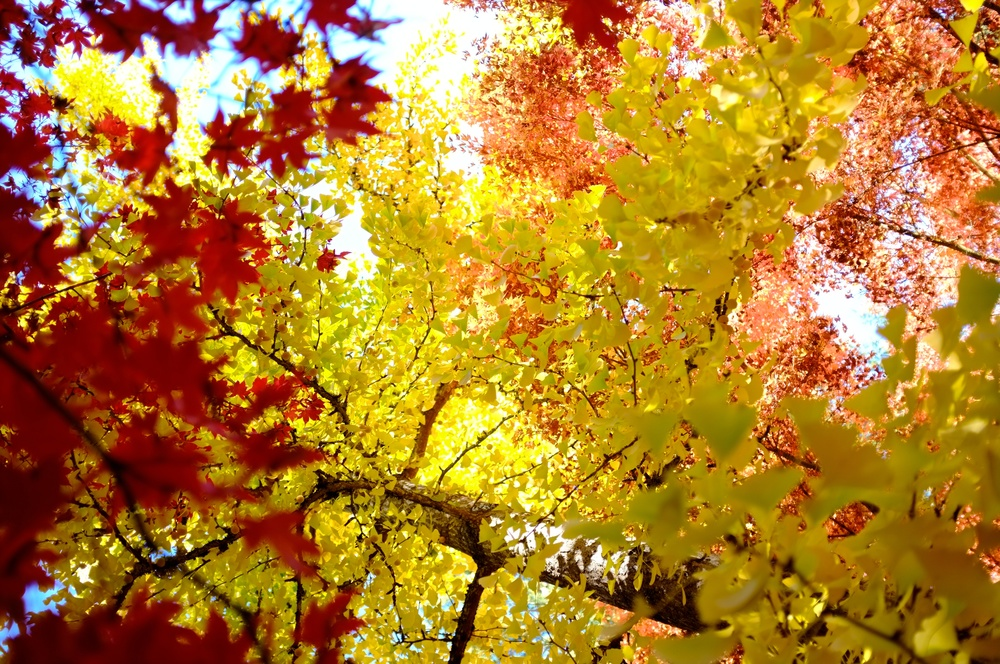 Fall colors at Lithia Park in Ashland, Oregon