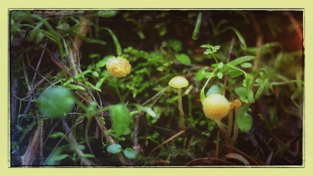 Tiny Mushrooms— Shot on a Fuji X-E1, 18mm ƒ/2 lens (heavily cropped)