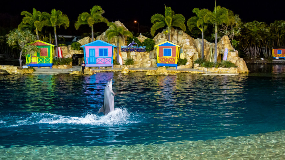 Corporate event entertainment at Seaworld Gold Coast