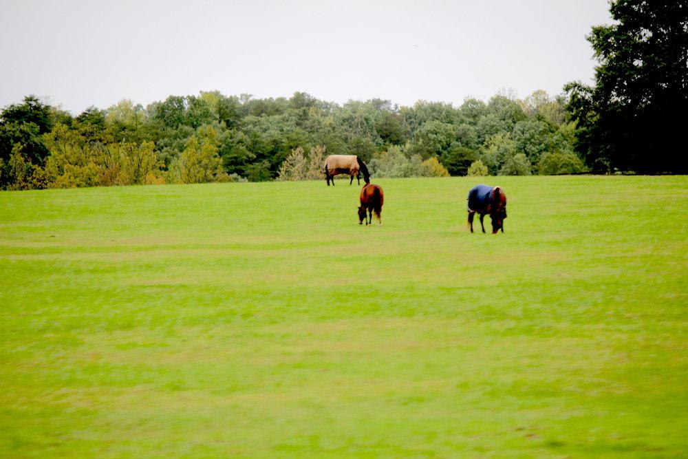 NC_Horses_Click.jpg