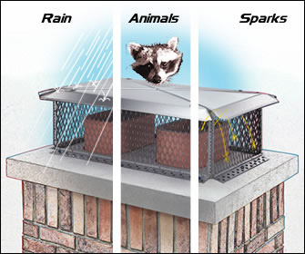 rain_animal_sparks.jpg