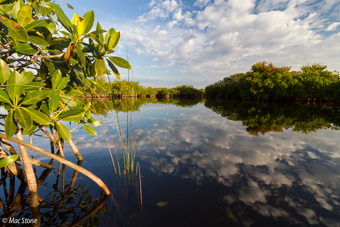 MacStone_Florida_Everglades-0749.jpg