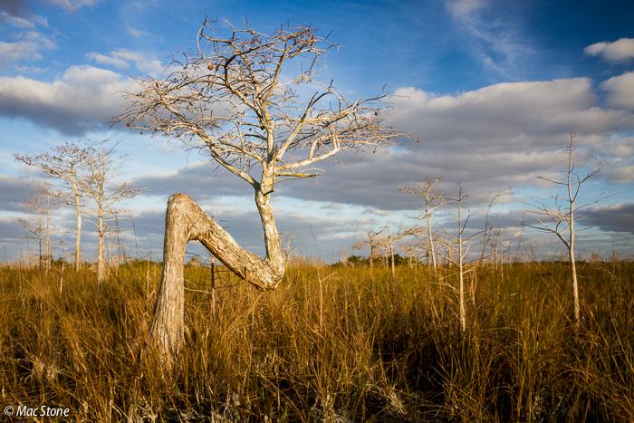 MacStone_Florida_Everglades-1774.jpg