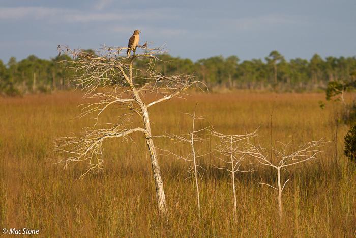 MacStone_Florida_Everglades-1780.jpg