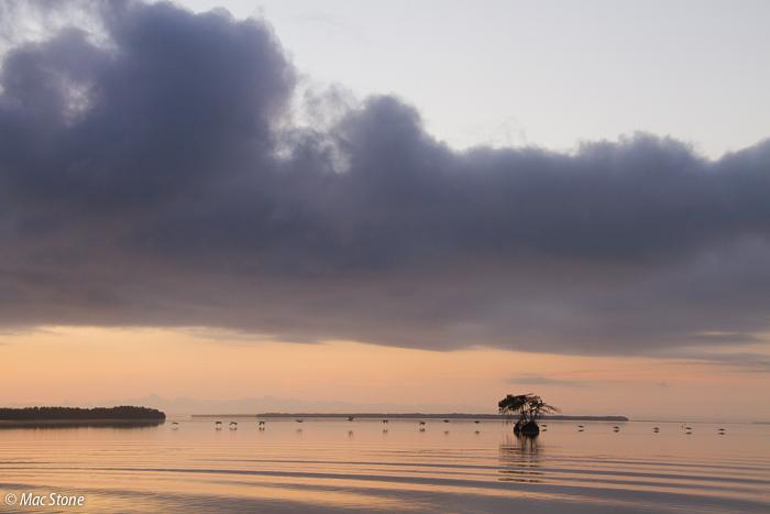 MacStone_Florida_Everglades-2159.jpg